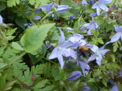 Bee at St Martin's church, Gospel Oak